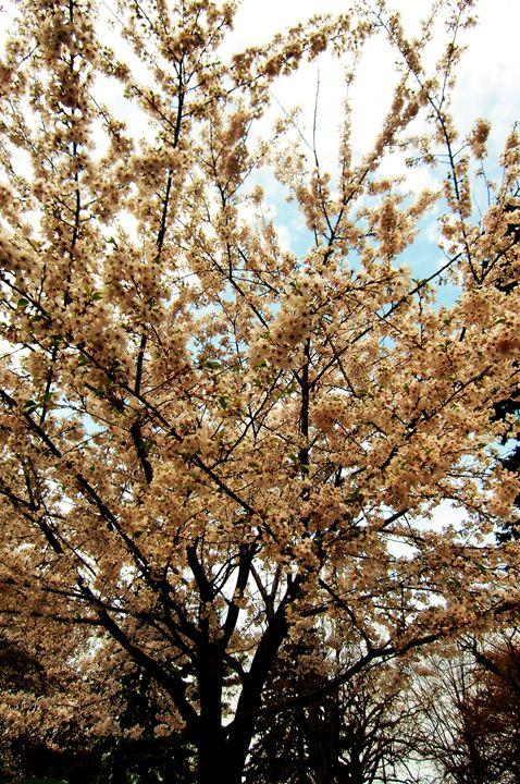Pink Cherry Blossom Tree - MissJuliaDoll