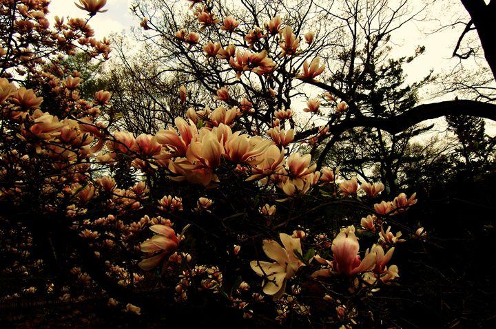 Dark Cherry Blossoms - MissJuliaDoll