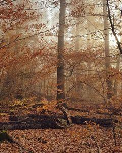Autumn Forest Daze
