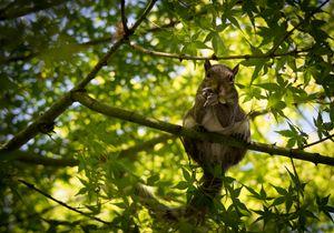 Squirrel Lunchbreak