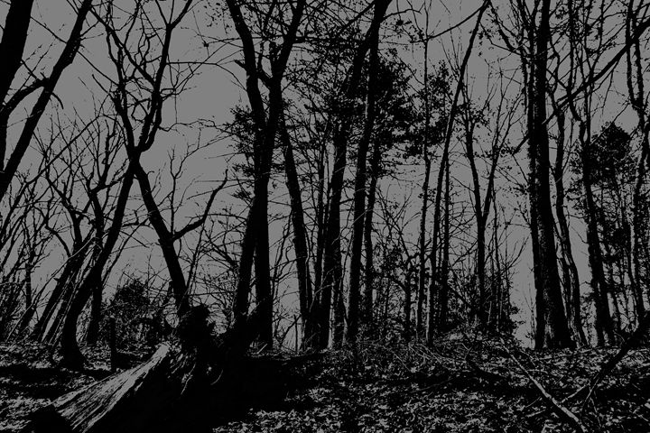 Lincoln Woods Black and White - My Soul ID Through Art