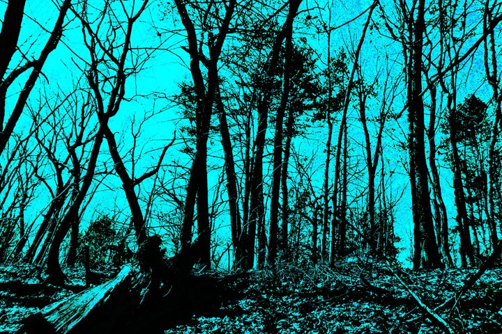 Lincoln Woods gray scale and color - My Soul ID Through Art