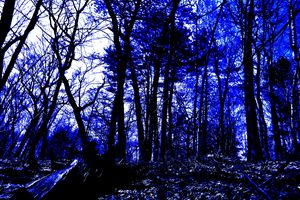 Lincoln Woods gray scale and color