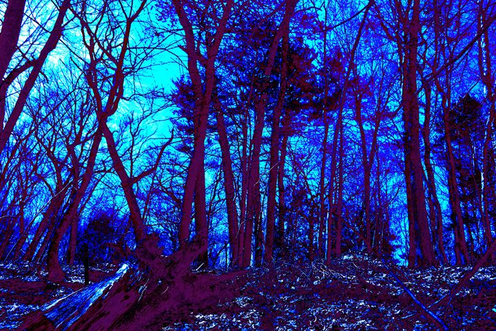 Lincoln Woods gray scale color value - My Soul ID Through Art