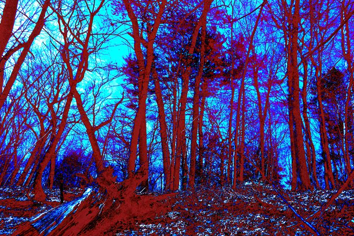 Lincoln Woods color value - My Soul ID Through Art