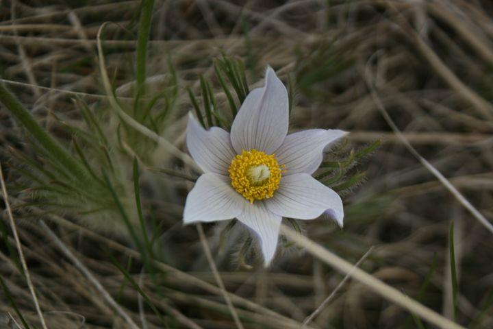 Lone Flower - Mavis West