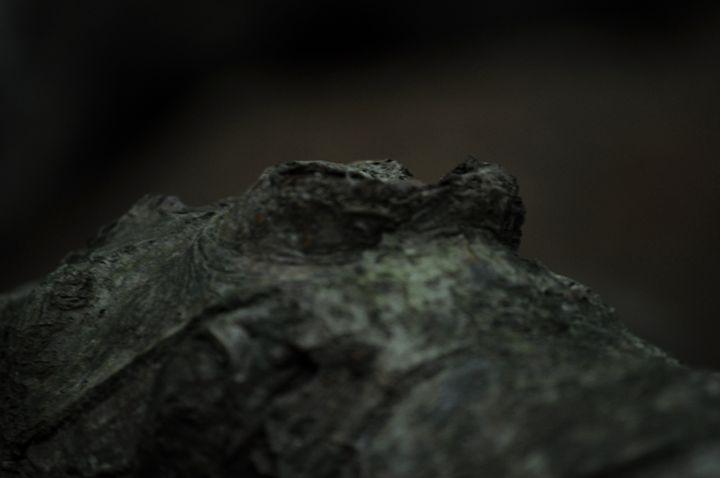 Crocodile - Wishmedead