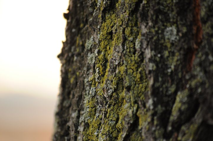 Tree - Amanda Vogtman