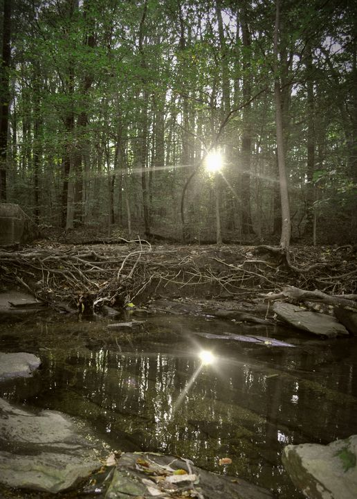 Reflection - Amanda Vogtman