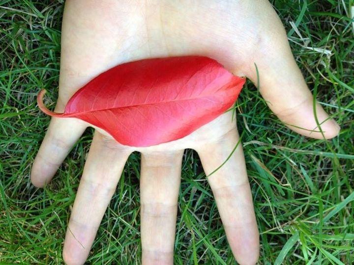 The Eye of Autumn - artlovee