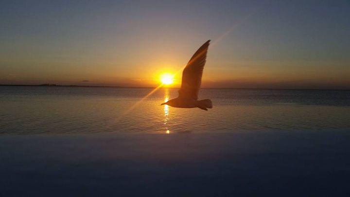 Bird In Flight - Roxys  Photo Art..