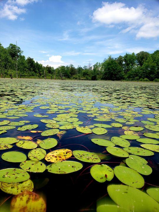 Kayaking in Montpelier, VA - Kimberly McFarland