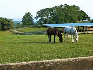 Horses in Virginia