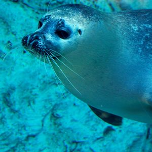 Harbour Seal 4 - Tara Wuennenberg