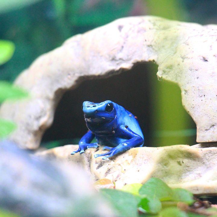 Frog 2 - Tara Wuennenberg