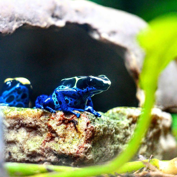 Frog 1 - Tara Wuennenberg