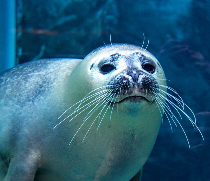Harbour Seal 2 - Tara Wuennenberg