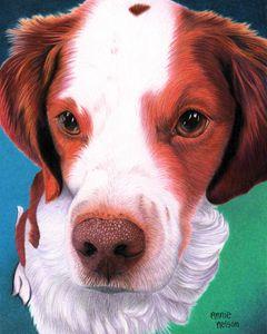 Brittany Spaniel - Annie's Colored Pencil Art