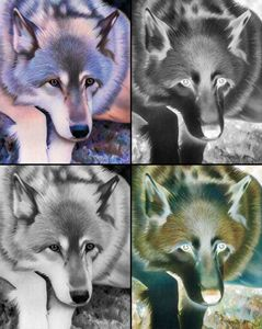 Gray Wolf Collage