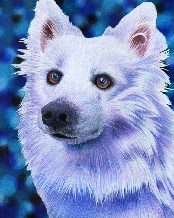 American Eskimo Dog - Annie's Colored Pencil Art