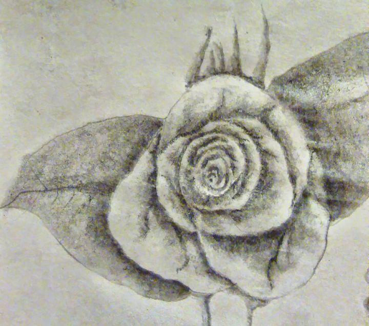 Rose - Scott Patti
