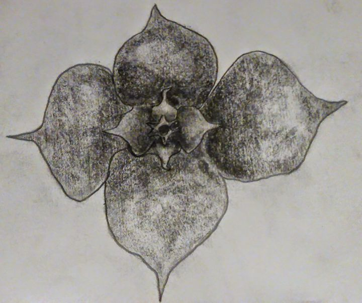 Flower Sketch - Scott Patti