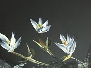 Magnolias in moonlight