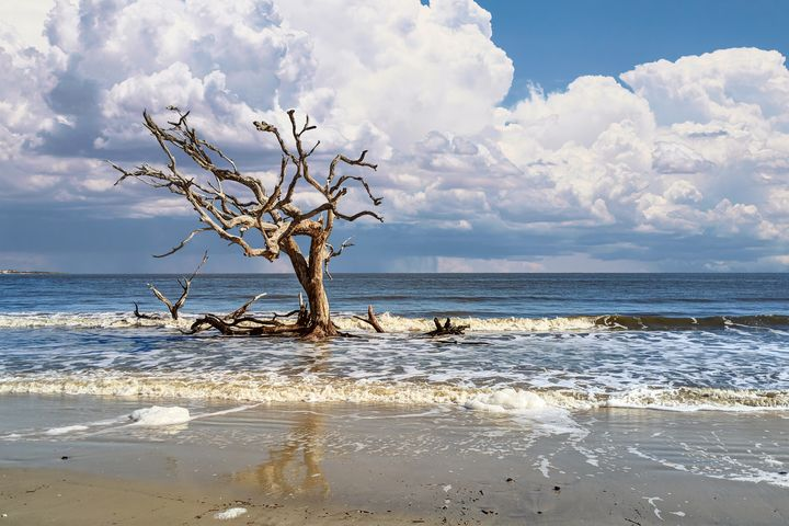Storm at Driftwood Beach - Stephanie Long
