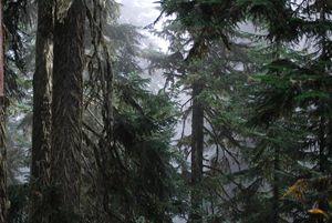 Forest Primieval