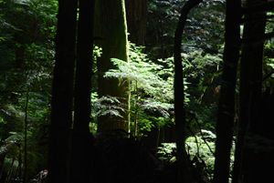 Sunlight on the Undergrowth - Wend Images Gallery