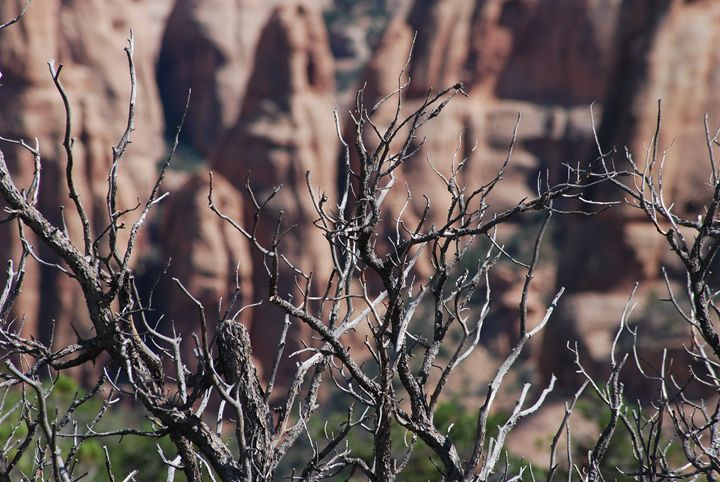 Life in the Canyons is Short & Harsh - Wend Images Gallery