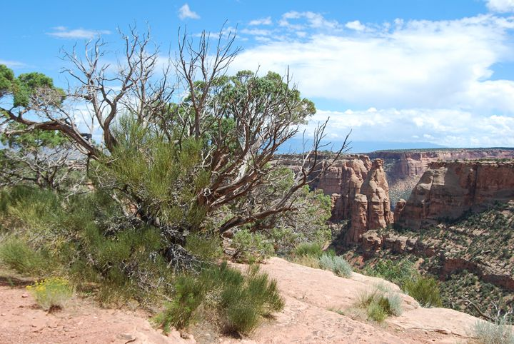 Monument Canyon Overlook - Wend Images Gallery