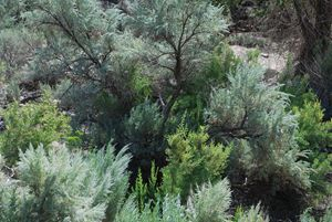 Vegetation in the Canyon - Wend Images Gallery