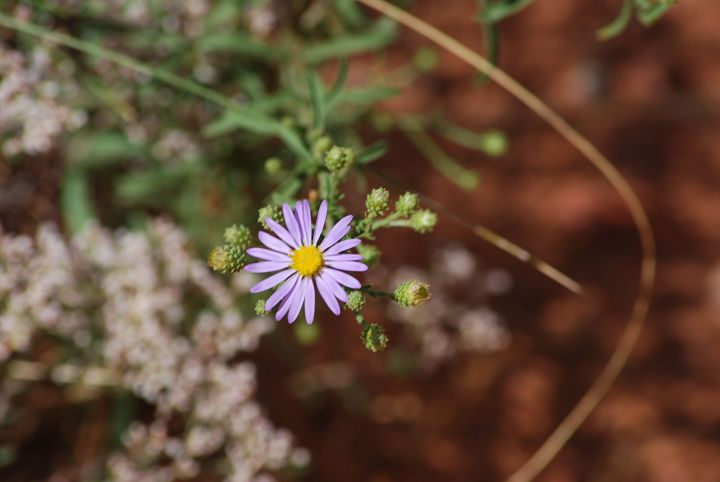 Canyon Flower - Wend Images Gallery