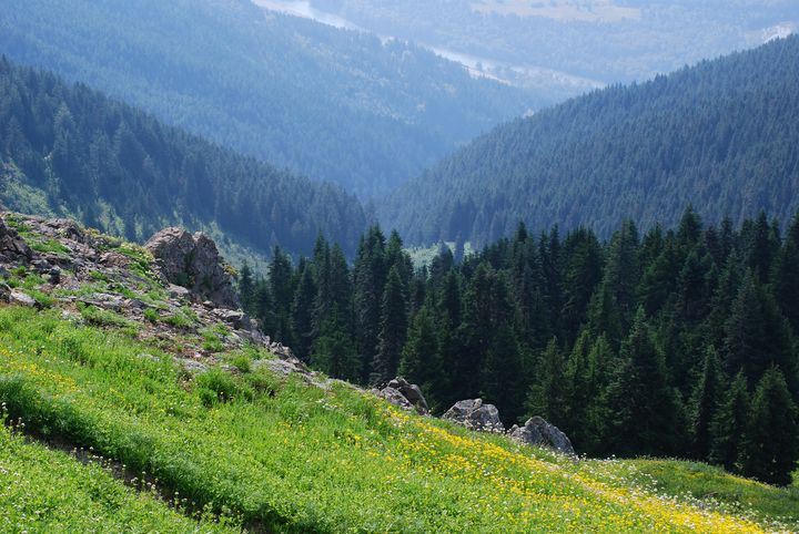 Meadows on Lower Sauk Mountain - Wend Images Gallery