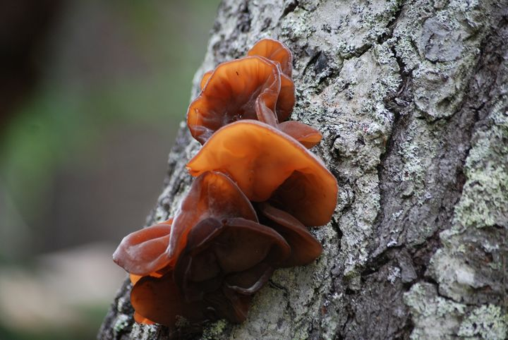 Fungus Along the Trail - Wend Images Gallery