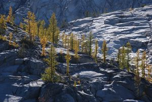 Larch Ridge