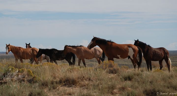 Wild Horses near Chaco Canyon - Wend Images Gallery