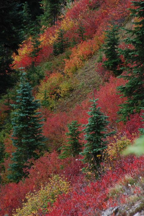 Autumn Mountain Glory - Wend Images Gallery