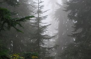 Forest of Mystery - Wend Images Gallery