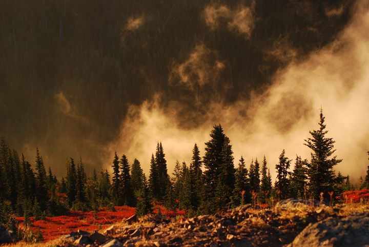 Blazing Meadow Colors - Wend Images Gallery