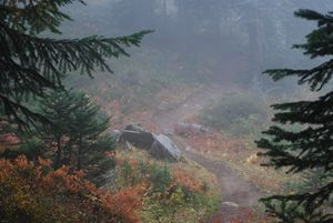 Foggy Trail to Noble Knob