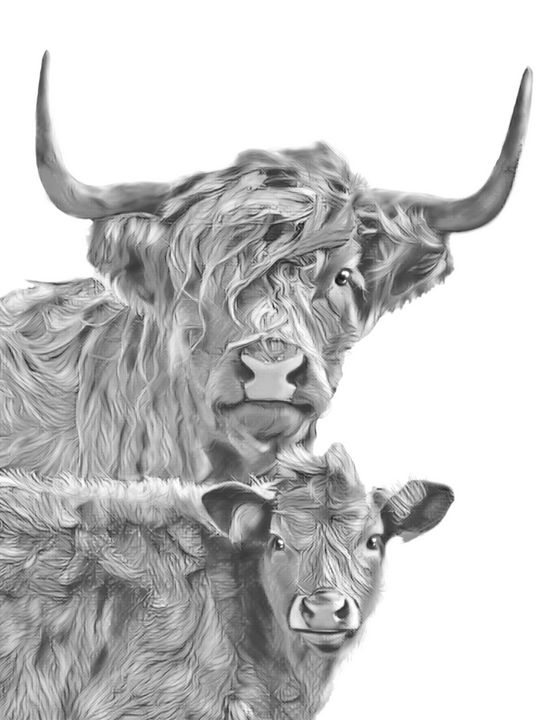 Long haired cow and calf (B&W) - Tomahto Art Studio