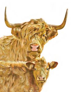 Long Haired Cow and Calf