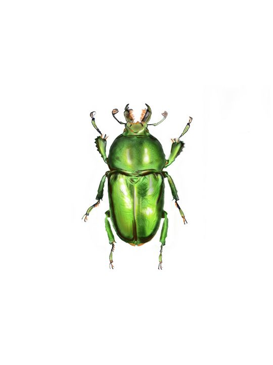 Beetle #2 - Tomahto Art Studio