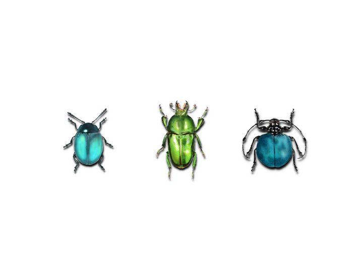 Beetles - Tomahto Art Studio
