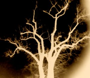 VIDEO TREE