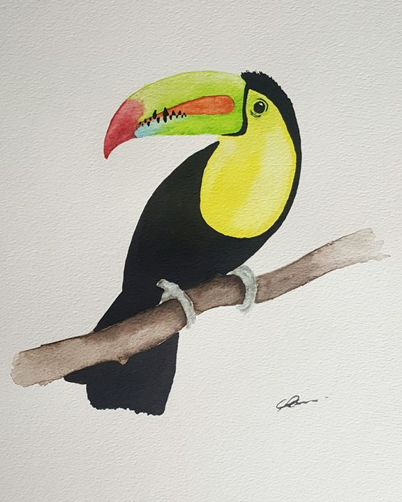 Toucan - Calum Robertson Art