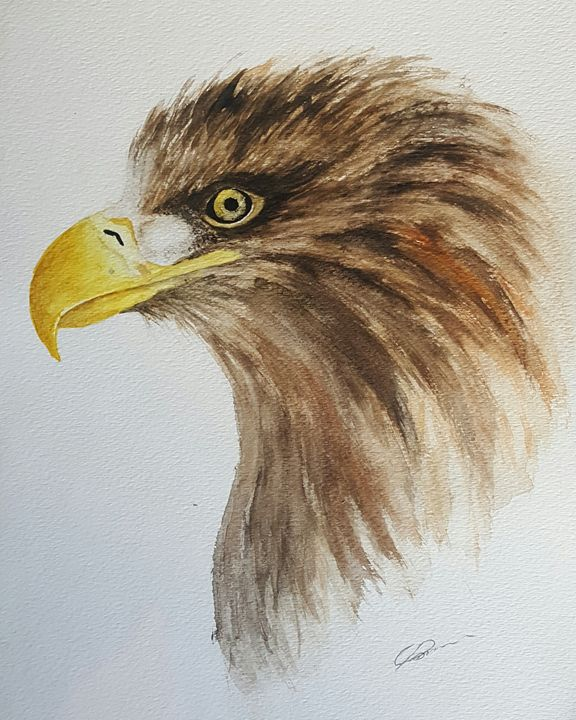 White-tailed Eagle - Calum Robertson Art
