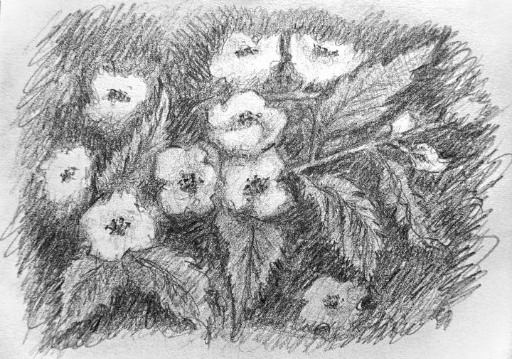 Jasmine Flowers - Olha Gordiiuk